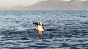 Experiences Wildlife-Kogelberg Nature Reserve-Ultimate ocean safari from Gordons Bay-5