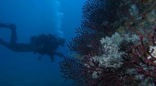 Plongée sous-marine-Antibes-Plongée Exploration à Antibes-1