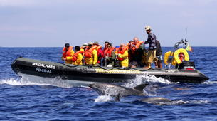 Snorkeling-São Miguel-Snorkeling with dolphins in Sao Miguel-2