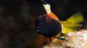 Plongée sous-marine-Antibes-Plongée Exploration à Antibes-19