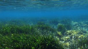 Plongée sous-marine-Antibes-Plongée Exploration à Antibes-10