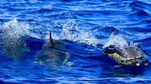 Snorkeling-São Miguel-Snorkeling with dolphins in Sao Miguel-4