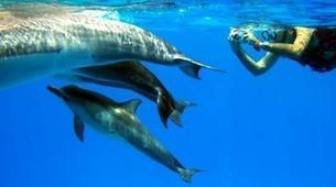 Snorkeling-São Miguel-Snorkeling with dolphins in Sao Miguel-1