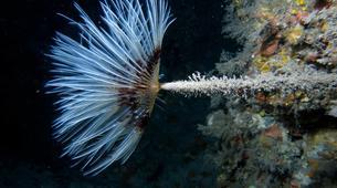 Plongée sous-marine-Antibes-Plongée Exploration à Antibes-8