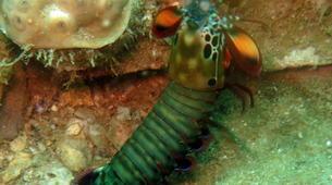 Scuba Diving-Île Sainte-Marie-Fun dive in Nosy Boraha, Madagascar-6
