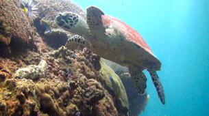 Scuba Diving-Île Sainte-Marie-Fun dive in Nosy Boraha, Madagascar-2