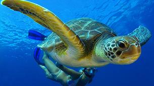 Snorkeling-Costa Adeje, Tenerife-Snorkeling excursion from Playa Las Americas in Costa Adeje-1