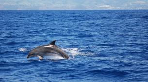 Snorkeling-São Miguel-Snorkeling with dolphins in Sao Miguel-5