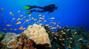 Scuba Diving-Cousteau Reserve-Stage de Plongée FFESSM dans la Réserve Cousteau en Guadeloupe-1