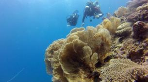 Scuba Diving-Île Sainte-Marie-Fun dive in Nosy Boraha, Madagascar-1