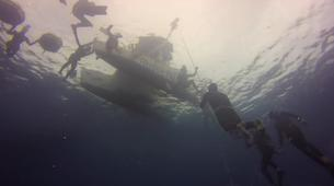 Freediving-Costa Adeje, Tenerife-Intermediate Freediving course in Costa Adeje, Tenerife-2