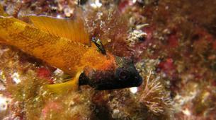 Plongée sous-marine-Antibes-Plongée Exploration à Antibes-13