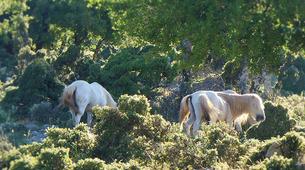 4x4-Kefalonia-4x4 Aenos National Park safari in Kefalonia-6