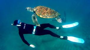 Apnée-Tabaiba, Tenerife-Freediving initiation course in Tabaiba, Tenerife-1