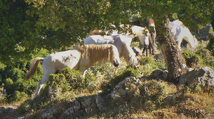 4x4-Kefalonia-4x4 Aenos National Park safari in Kefalonia-1