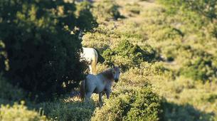 4x4-Kefalonia-4x4 Aenos National Park safari in Kefalonia-4
