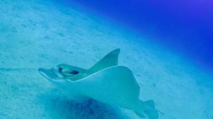 Scuba Diving-Costa Adeje, Tenerife-PADI Open Water Diver course in Costa Adeje, Tenerife Island-4