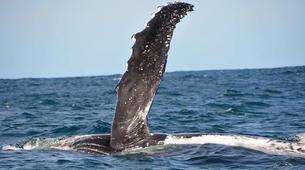 Wildlife Experiences-Mbotyi-Sardine run in Mboyti near Durban-5