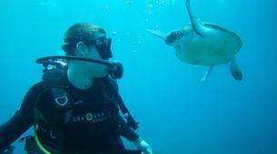 Scuba Diving-Costa Adeje, Tenerife-First scuba dive in Costa Adeje, Tenerife Island-4