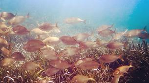 Scuba Diving-Malta-PADI Discover Scuba Diver in Qawra, Malta-4
