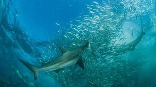 Wildlife Experiences-Mbotyi-Sardine run in Mboyti near Durban-2