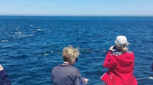 Experiences Wildlife-Gansbaai-Whale watching excursion from Gansbaai-3