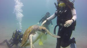 Scuba Diving-Costa Adeje, Tenerife-Try dive in Costa Adeje, Tenerife-6