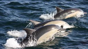 Experiences Wildlife-Gansbaai-Big 5 sea safari excursion from Gansbaai-1