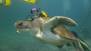 Plongée sous-marine-Costa Adeje, Tenerife-PADI Open Water Diver course in Costa Adeje, Tenerife-2