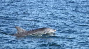 Experiences Wildlife-Gansbaai-Big 5 sea safari excursion from Gansbaai-2