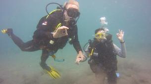 Scuba Diving-Costa Adeje, Tenerife-Try dive in Costa Adeje, Tenerife-1