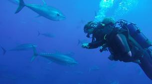 Scuba Diving-Malta-PADI Discover Scuba Diving course in Mellieha Bay, Malta-6