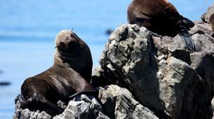 Experiences Wildlife-Gansbaai-Big 5 sea safari excursion from Gansbaai-5