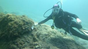 Plongée sous-marine-Costa Adeje, Tenerife-PADI Open Water Diver course in Costa Adeje, Tenerife-3