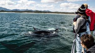 Experiences Wildlife-Gansbaai-Whale watching excursion from Gansbaai-5