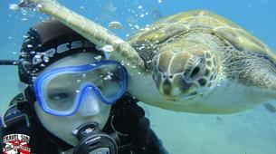 Scuba Diving-Costa Adeje, Tenerife-First scuba dive in Costa Adeje, Tenerife Island-1