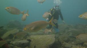 Scuba Diving-Costa Adeje, Tenerife-PADI Open Water Diver course in Costa Adeje, Tenerife-2