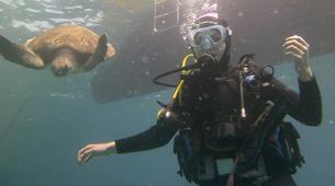 Scuba Diving-Costa Adeje, Tenerife-PADI Open Water Diver course in Costa Adeje, Tenerife-1