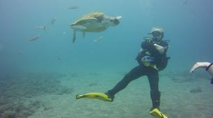Scuba Diving-Costa Adeje, Tenerife-Try dive in Costa Adeje, Tenerife-3