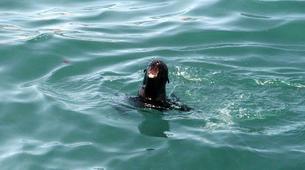 Experiences Wildlife-Gansbaai-Big 5 sea safari excursion from Gansbaai-4