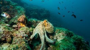Plongée sous-marine-Pula-First Dive in Pula, Croatia-2