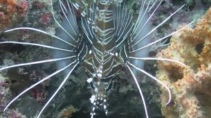 Scuba Diving-Zanzibar-Adventure dives in Paje, Zanzibar-8