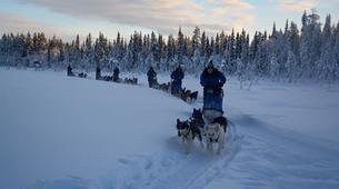 Dog sledding-Kiruna-Dog sledding excursions in Svappavaara near Kiruna-3