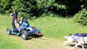 Chiens de traîneau-Aveyron-Baptême en traîneau à roues près de Laguiole dans l'Aveyron-4