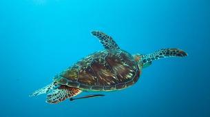 Scuba Diving-Zanzibar-Adventure dives in Paje, Zanzibar-4