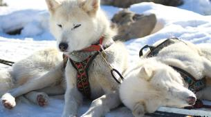 Dog sledding-Province of Huesca-Mushing excursions in Tena Valley, Huesca-2
