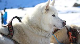Dog sledding-Province of Huesca-Mushing excursions in Tena Valley, Huesca-5