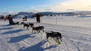 Dog sledding-Kiruna-Dog sledding excursions in Svappavaara near Kiruna-1