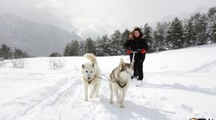 Dog sledding-Province of Huesca-Mushing excursions in Tena Valley, Huesca-13