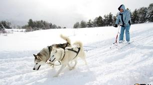 Dog sledding-Province of Huesca-Mushing excursions in Tena Valley, Huesca-11